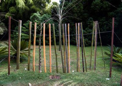 Druhy bambusu