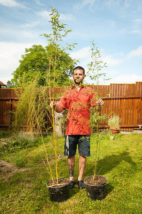 Koupit bambus od bambusáře