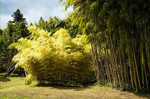 Bambusové zátiší