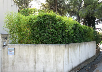 Udržovaný živý plot z bambusu I.