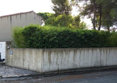 Udržovaný živý plot z bambusu II.