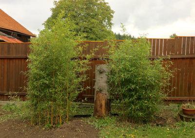 Živý plot z Phyllostachys Aureosulcata Aureocaulis 1 rok po vysazení a přidání protikořenové zábrany